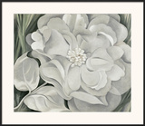 The White Calico Flower, c.1931 Poster by Georgia O'Keeffe