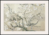 Almond Branches in Bloom  San Remy  c1890 (tan)