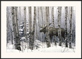 A Walk in the Woods Print by Stephen Lyman