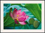 Lotus Paradise Framed Giclee Print by Nhiem Hoang The