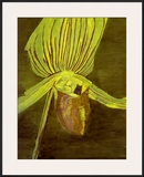 Orchid, c.1998 Posters by Luc Tuymans