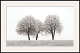 Three Trees Posters by Ilona Wellmann