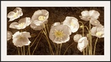 Baroque Poppies Prints by Ives Mccoll