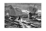 19th Century Whale Hunt Giclee Print by CCI Archives