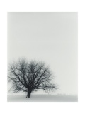 Tree In Winter Giclee Print by  Cristina
