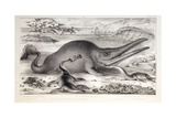 1858 Prehistoric Marine Reptiles Giclee Print by Stewart Stewart