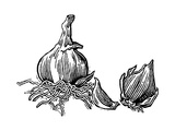 Bulbs of Garlic, Woodcut Giclee Print by Gary Gastrolab