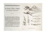 1770 Maastricht Mosasaur by Cuvier Giclee Print by Stewart Stewart