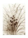 Leonardo Da Vinci's Rushes In Flower Giclee Print by Sheila Terry