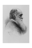 Stipple Engraving of Charles Darwin As An Old Man Giclee Print by National Library of Medicine