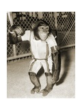 First Chimpanzee In Space Giclee Print by  NASA