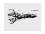 Drawing of the Leg And Foot of a Fly Giclee Print by Jeremy Burgess