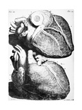Heart Anatomy, 18th Century Giclee Print by Science Photo Library