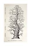 1886 French Copy Haeckel 'tree of Life' Giclee Print by Stewart Stewart