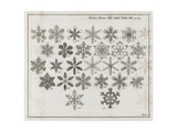 Snowflake Research, 18th Century Giclee Print by Middle Temple Library