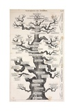 1874 Haeckel First Full 'tree of Life' Giclee Print by Stewart Stewart