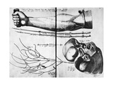 Arm Veins And Valves, 16th Century Giclee Print by Science Photo Library