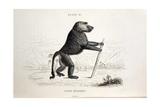 1833 Jardine Papio Sylvanus Baboon Giclee Print by Stewart Stewart