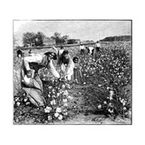 Cotton Industry, Early 20th Century Giclee Print by Science Photo Library