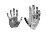 Human And Gorilla Handprint Giclee Print by Sheila Terry