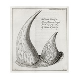 African Rhinoceros Horns, 18th Century Giclee Print by Middle Temple Library