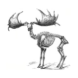 Giant Deer, 19th Century Artwork Giclee Print by Science Photo Library