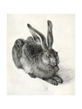 Young Hare, by Durer Giclee Print by Sheila Terry
