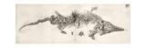 Ichthyosaur Skeleton Engraving 1819 Home Giclee Print by Stewart Stewart