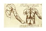 Back Musculature Lámina giclée por Sheila Terry