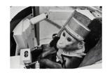 Space Monkey Giclee Print by Ria Novosti