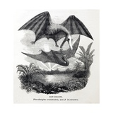 1857 Gosse Pterodactyle Bat-Lizards Giclee Print by Stewart Stewart