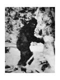 Bigfoot Film, 1967 Giclee Print by Ria Novosti