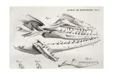 1770 Cuvier Maastricht Mosasaur Giclee Print by Stewart Stewart
