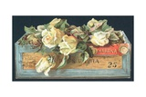 Roses in Cigar Box, Christmas Card Giclee Print by  English School