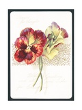 Pansies for Thoughts, Christmas Card Giclee Print