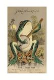 Frog Playing Banjo Giclée-tryk