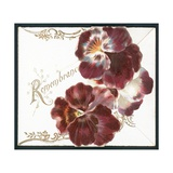 Pansies, Remembrance Card Giclee Print