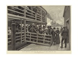 Russian Emigrants Landing from the Tender at the Barge Office, New York Giclee Print by Julius Mandes Price