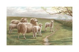A Song of Spring Giclee Print by Charles Jones