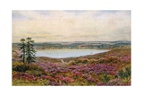 The Great Pond, Frensham Giclee Print by Alfred Robert Quinton