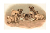 Four Pug Dogs Sitting around a Kitten on a Plate Giclee Print by  English School