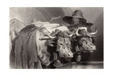 Oxen at the Tank, Geneva, Switzerland Giclee Print by Edwin Henry Landseer