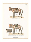 Donkeys Wearing Saddles Giclee Print