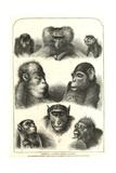 Ancestry According to Darwin Giclee Print