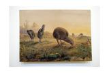 Kiwi Mantells, 1852 Giclee Print by Joseph Wolf