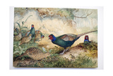 Japanese Pheasants, 1865 Reproduction procédé giclée par Joseph Wolf