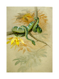 Green Boa Giclee Print by Joseph Wolf