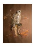 Iceland Falcon (Hierofalco Islandus), 1856-67 Giclee Print by Joseph Wolf