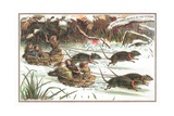 Urchins Having a Sledge 'Rat Race', Christmas Card Giclee Print