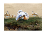 Great Bustards Giclee Print by Joseph Wolf